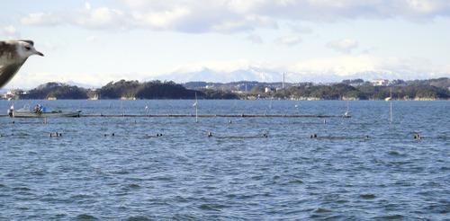 Matsushima5_2
