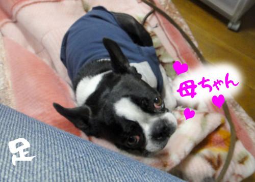 Shogatsu19