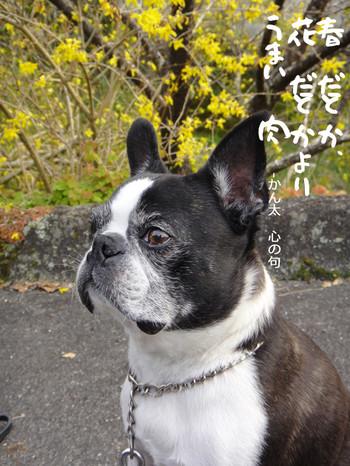 Asuke_3